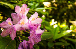 fantastiska blommor Royaltyfri Fotografi