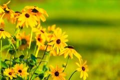 fantastiska blommor Fotografering för Bildbyråer