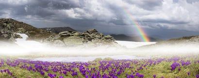 Fantastiska blommor - krokusar Fotografering för Bildbyråer