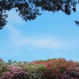 Fantastiska blommor och träd på bakgrunden av blå himmel Arkivbilder