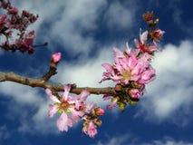 fantastiska färgblommor Royaltyfri Foto