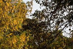Fantastiska färgrika höstsidor på träd Royaltyfri Bild