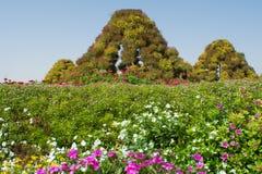 Fantastiska härliga gröna höga pyramider som göras från blommor i trädgården Arkivfoton