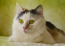 Fantastiska kattögon arkivfoto
