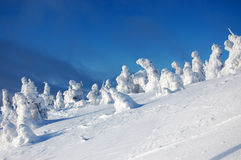 Fantastiska snöskulpturer Fotografering för Bildbyråer