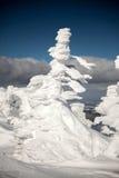 Fantastiska snowdiagram på trees Royaltyfria Bilder