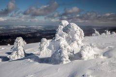 Fantastiska snowdiagram på trees Fotografering för Bildbyråer