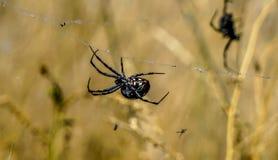 Fantastiska spindlar runt om Salt Lake Fotografering för Bildbyråer