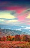 Fantastiskt färghöstlandskap i de Carpathian bergen arkivfoton
