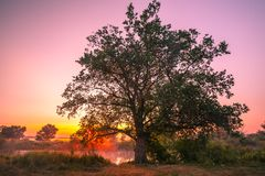 Fantastiskt färgrik solnedgång Royaltyfria Foton
