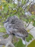Fantastiskt foto för liten fågel Arkivbilder
