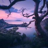 Fantastiskt gammalt träd i crimean berg på soluppgång Arkivbild