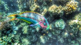 Fantastiskt havsliv Arkivfoton