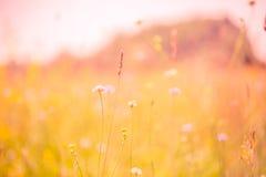 Fantastiskt inspirerande landskap för blommafält mot färgrik bokehbakgrund royaltyfria foton