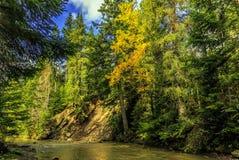 Fantastiskt landskap för höst färgrika träd över bergfloden Royaltyfria Foton