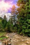 Fantastiskt landskap för höst färgrika träd över bergfloden Fotografering för Bildbyråer