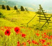 Fantastiskt landskap med blommavallmo på en bakgrund av fres Arkivfoton