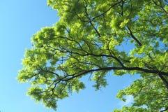 Fantastiskt landskap med trädet och den INGEN himlen 4 royaltyfri foto