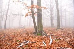 Fantastiskt orange höstlandskap i skog Arkivbild