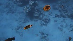 Fantastiskt Röda havet stock video