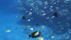 Fantastiskt Röda havet arkivfilmer