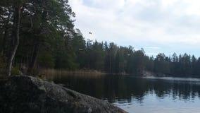 Fantastiskt skönhetnaturlandskap på en sommardag Fåglar som flyger ovanför sjön Stenig kustvårdag sweden arkivfilmer