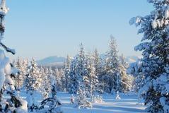 fantastiskt trä Royaltyfria Bilder