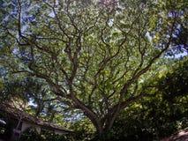 Fantastiskt träd royaltyfri fotografi