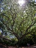 Fantastiskt träd royaltyfria foton