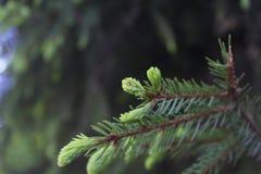 Fantastiskt träd Arkivfoto