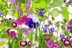 fantastiskt trädgårds- litet ovanligt royaltyfri bild
