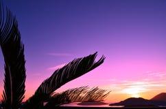 Fantastiskt tropiskt landskap på solnedgången på Italien, Liguria Fotografering för Bildbyråer