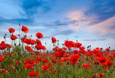 Fantastiskt vallmofältlandskap mot färgrik himmel Arkivbild