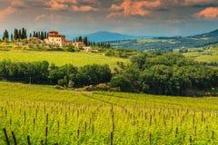 Fantastiskt vingårdlandskap med stenhuset, Tuscany, Italien, Europa royaltyfri bild