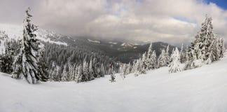Fantastiskt vinterlandskap. Carpathian Ukraina. Fotografering för Bildbyråer
