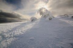 Fantastiskt vinterlandskap. Carpathian Ukraina. Royaltyfri Foto
