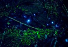 Fantastiskt waitomoglöd avmaskar i grottor som lokaliseras i Nya Zeeland Royaltyfria Bilder