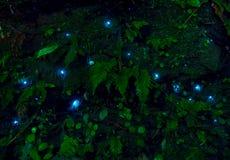 Fantastiskt waitomoglöd avmaskar i grottor som lokaliseras i Nya Zeeland Royaltyfri Fotografi