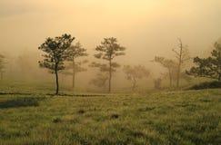 Fantastyczna mgłowa rzeka z świeżą zieloną trawą Obrazy Royalty Free
