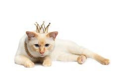 Fantastycznego trakenu Mekong Bobtail kot Odizolowywał Białego tło Fotografia Royalty Free