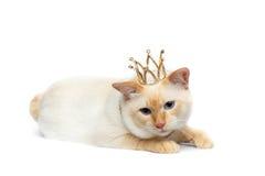 Fantastycznego trakenu Mekong Bobtail kot Odizolowywał Białego tło Zdjęcia Stock