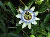 Fantastyczny kwiat z gościem Fotografia Stock