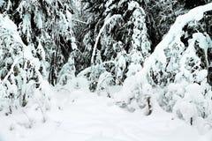 Fantastyczny las po wiele dni opad ?niegu obraz stock