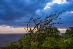 Fantastyczny surrealistyczny krajobraz z gnarled skręcaniem rozgałęzia się na dennym zmierzchu tle Zdjęcie Stock