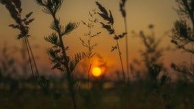 Fantastyczny wieczór krajobraz zmierzch w polu zdjęcie royalty free