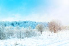 Fantastyczny zima krajobraz z niebieskim niebem i śnieżnymi drzewami Zima rosyjski krajobraz Obraz Royalty Free