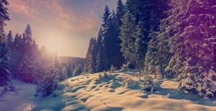 Fantastyczny zima lasu krajobraz w zmierzchu Lodowaty ?nie?ny jedlinowych drzew glowin w ?wietle s?onecznym Zima wakacje poj?cie  fotografia stock