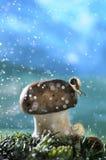 Fantasy. Snai and mushroom for fantasy world stock image