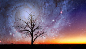 Fantasy alien landscape with lone tree and galaxy vortex stock images