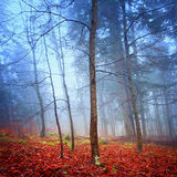 Fantasy autumn forest Stock Images